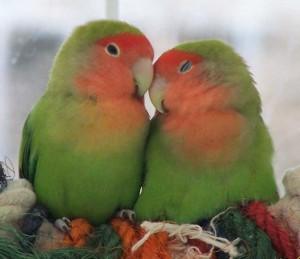Är fåglar enträgna?